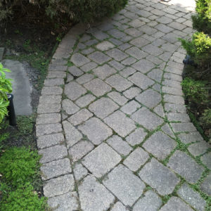 moss-between-pavers